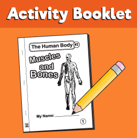 The-Human-Body#2-Muscles-and-Bones1
