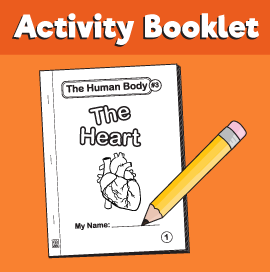 The-Human-Body#3-heart-
