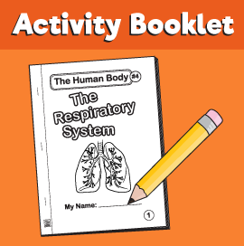 The-Human-Body#4-The-Respiratory-System-