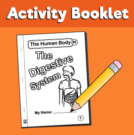 The-Human-Body#5-The-Digestive-System