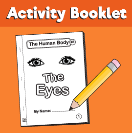 The-Human-Body#8-The-Eyes