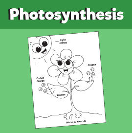 Photosynthesis - Coloring Page