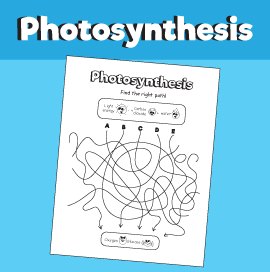 Photosynthesis - Find the Path