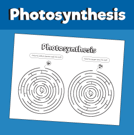 Photosynthesis Maze
