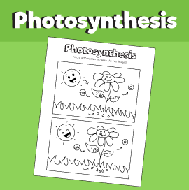 Photosynthesis - Spot the Difference
