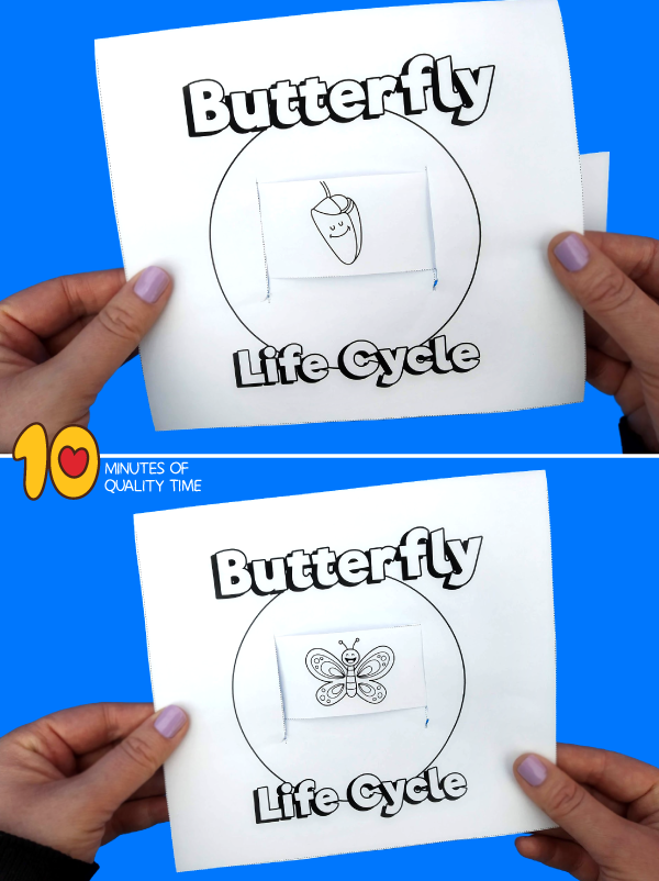 butterfly life cycle for kids