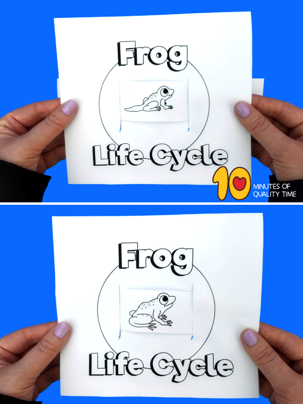 frog life cycle kindergarten