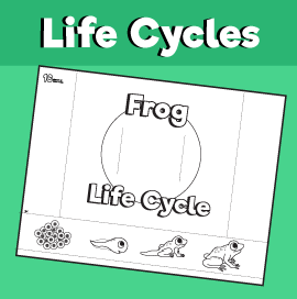 Frog Life Cycle Slider