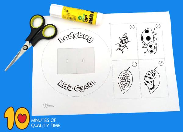 ladybug life cycle preschool