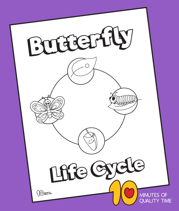 coloring page of butterfly life cycle