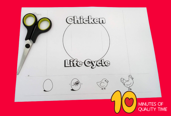 life cycle of a chicken for kindergarten