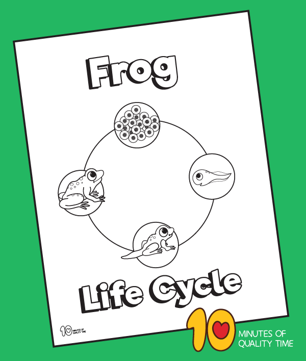 Life Cycle Of A Frog Coloring Page 10 Minutes Of Quality Time