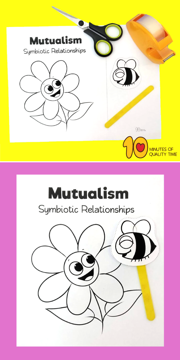 Symbiosis Relationships Of Flowers And Bees 10 Minutes